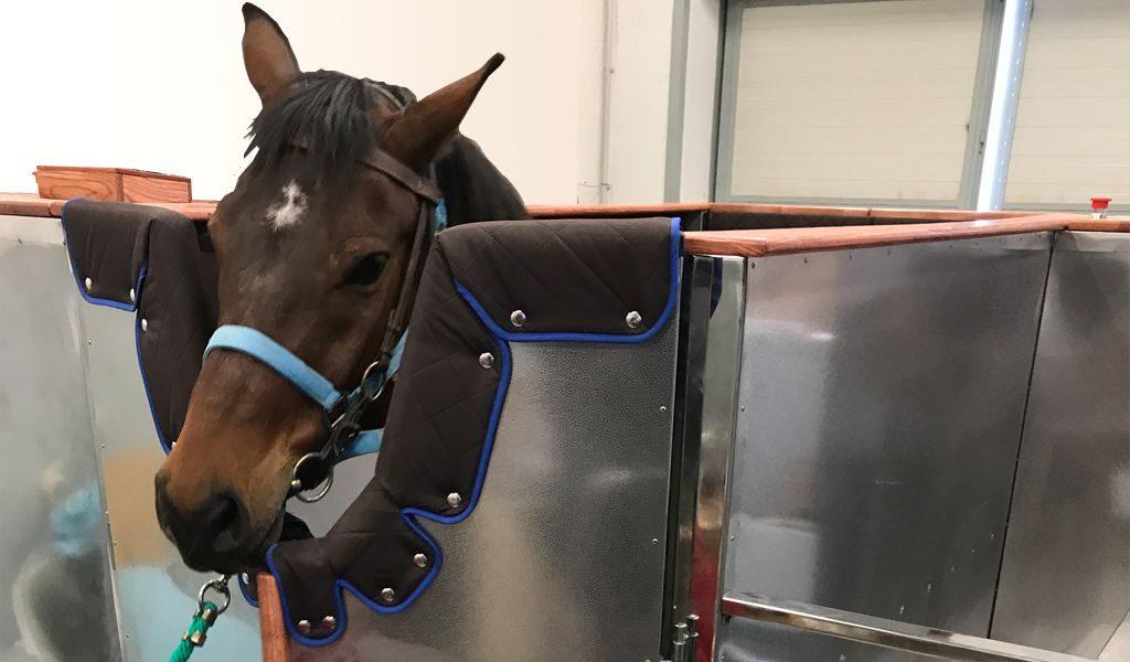horse 10