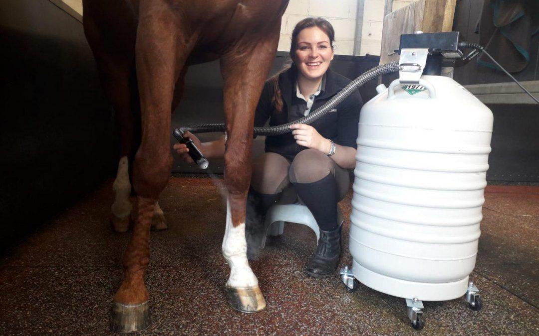Cryothérapie alternative : le cas du soin des chevaux